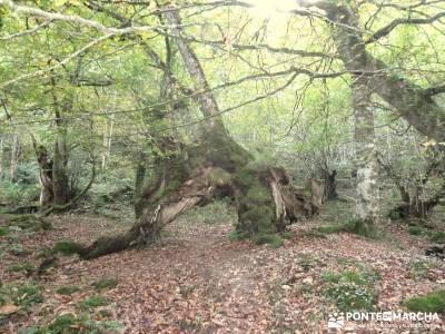 Parque Natural Saja-Besaya y Valderredible (Monte Hijedo) rutas y mapas campamentos de verano madrid